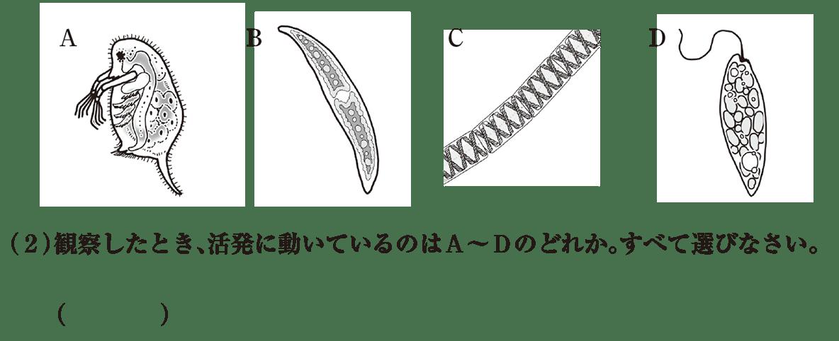 中1理科 生物3 練習2 A~Dと(2)空欄