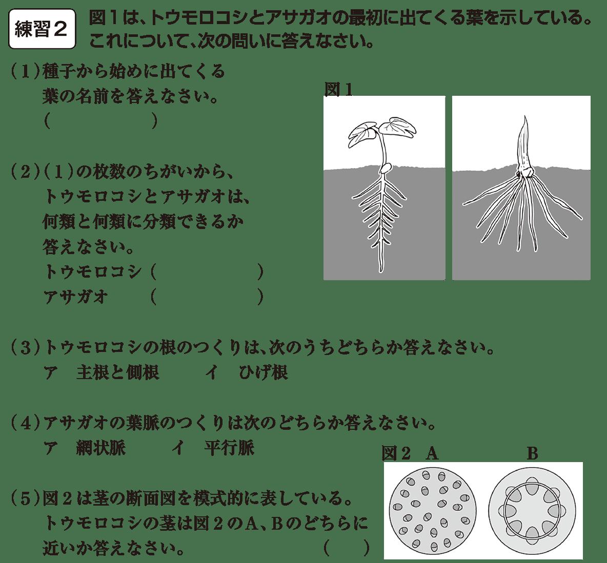 中1 理科生物14練習2(答えなし)