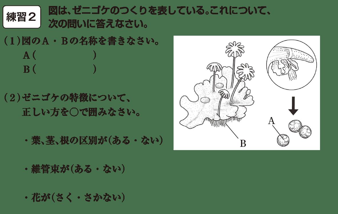 中1 理科生物15練習2(答えなし