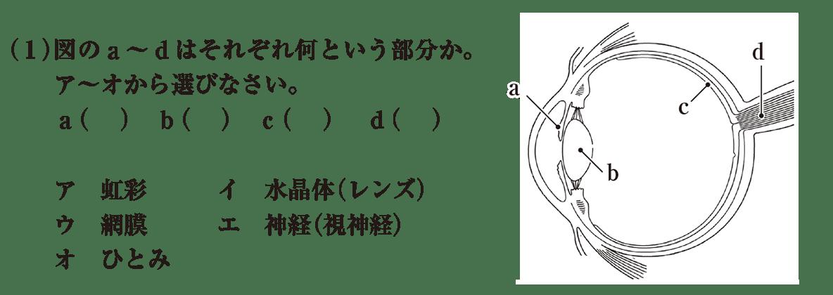 中2 理科生物10 練習2(1)と目の断面図 答えなし