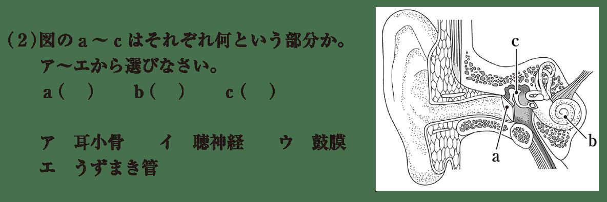 中2 理科生物10 練習2(2)と耳の断面図 答えなし
