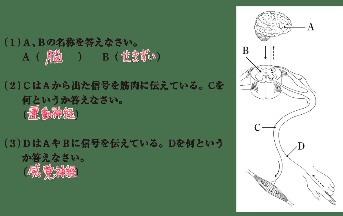 中2 理科生物11 練習1 答え入り