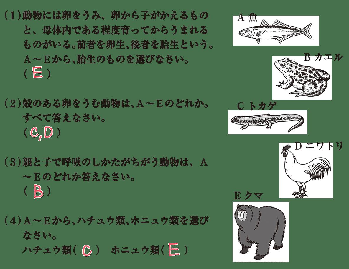 中2 理科生物14 練習1 答え入り