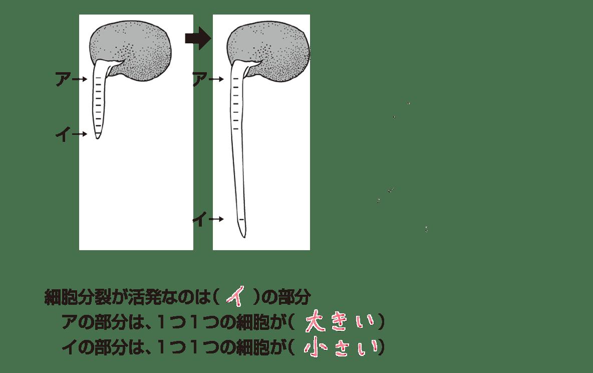 中3 生物1  ポイント2 いちばん右の図は不要、のこりを表示、答え入り