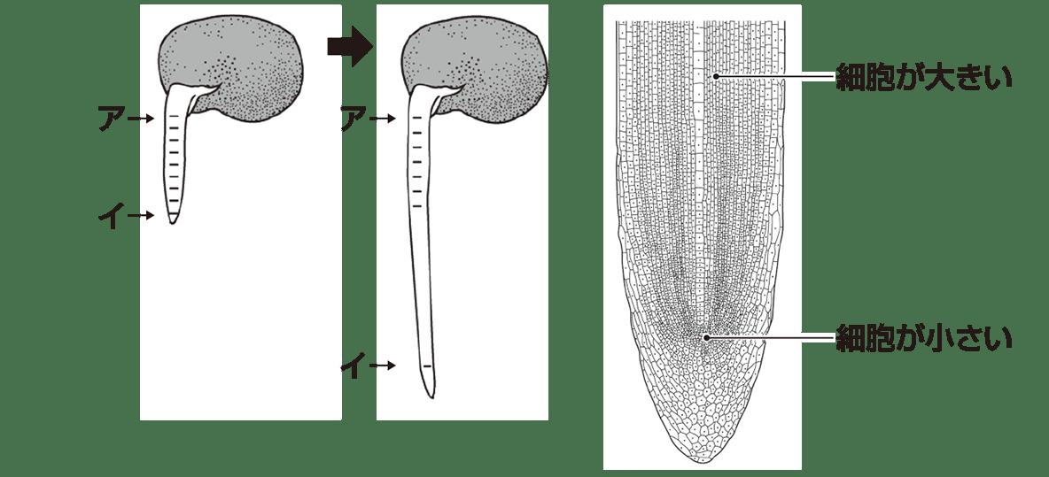 中3 生物1  ポイント2 下の3行不要、上の3つの図のみ表示