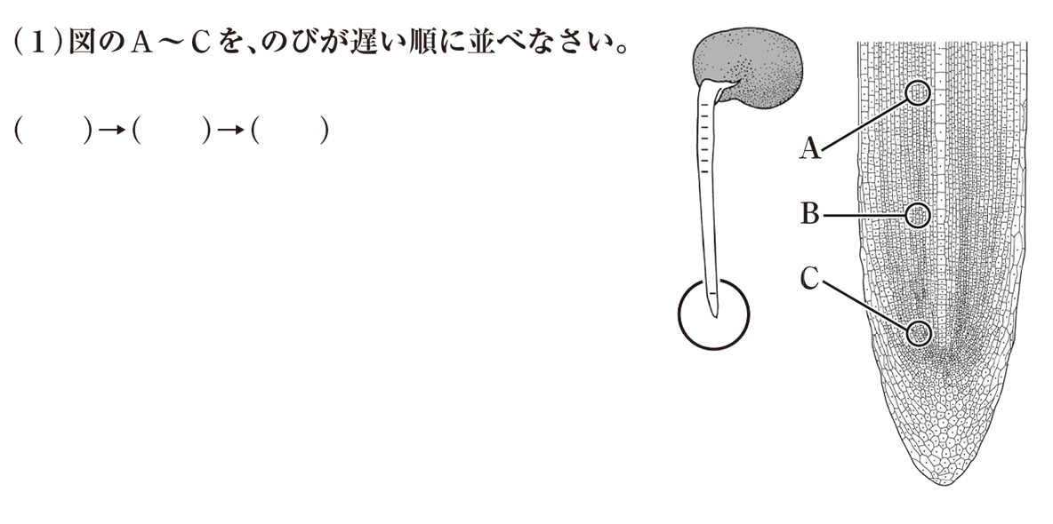 中3 生物1 練習1 (1)と右の2つの図のみ表示、(2)は不要 答えなし