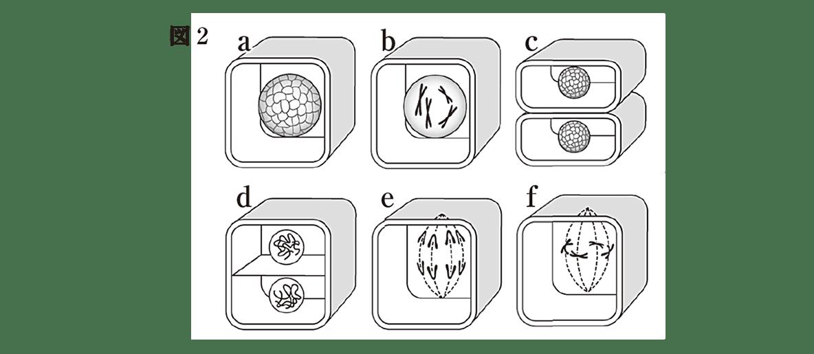 中3 生物3 練習 図2のみ表示