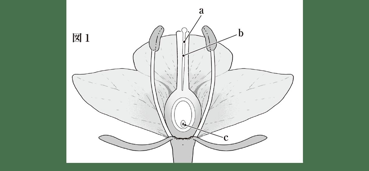 中3 生物4  練習 図1のみ表示