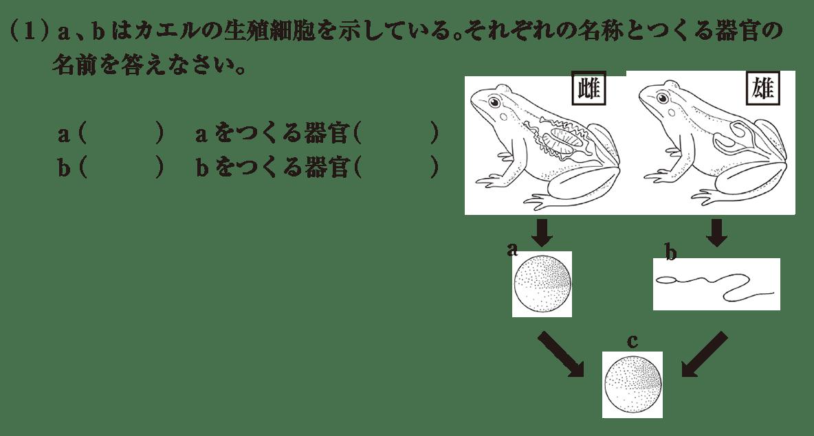 中3 生物6  練習1 (1)と右下の図のみ表示、答えなし