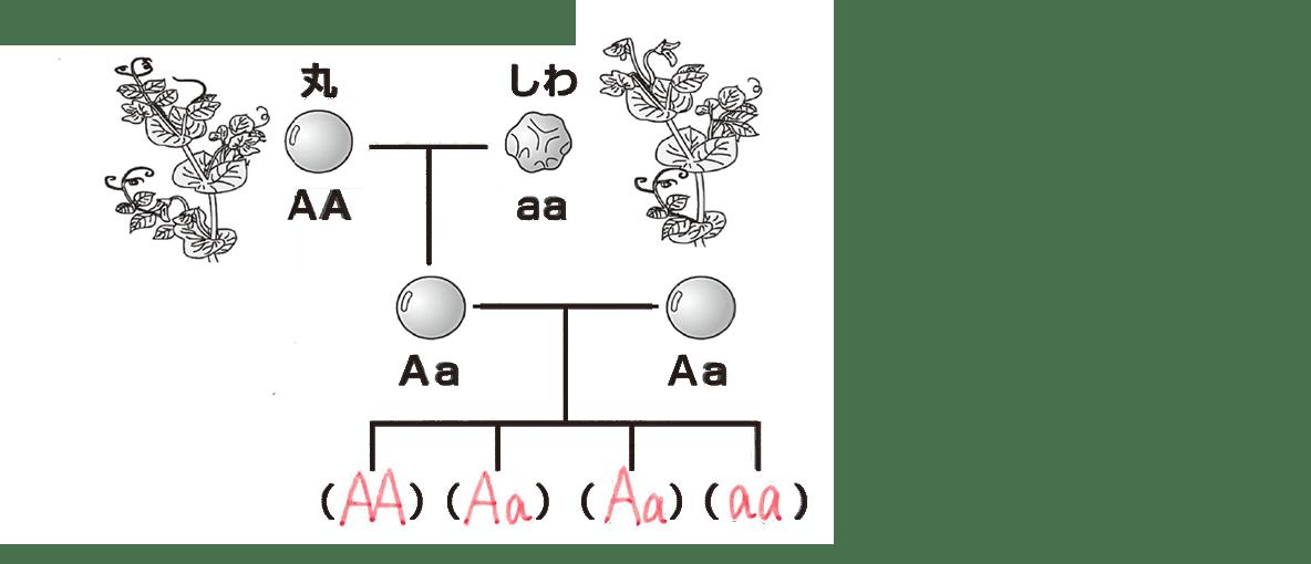 中3 生物9  ポイント1 左の図のみ、右の図と下の1行不要、答え入り