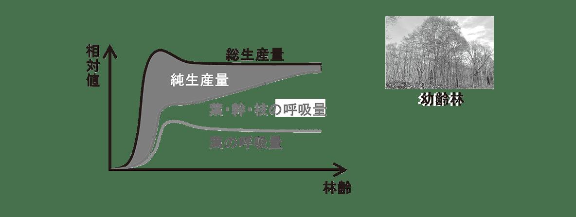 高校 生物 生態2 ポイント2 グラフと幼齢林の図