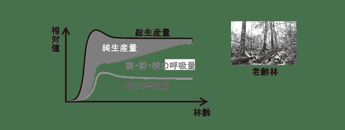 高校 生物 生態2 ポイント2 グラフと老齢林の図