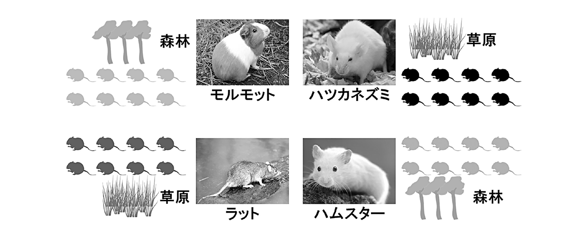 高校 生物 生態4 ポイント2 図