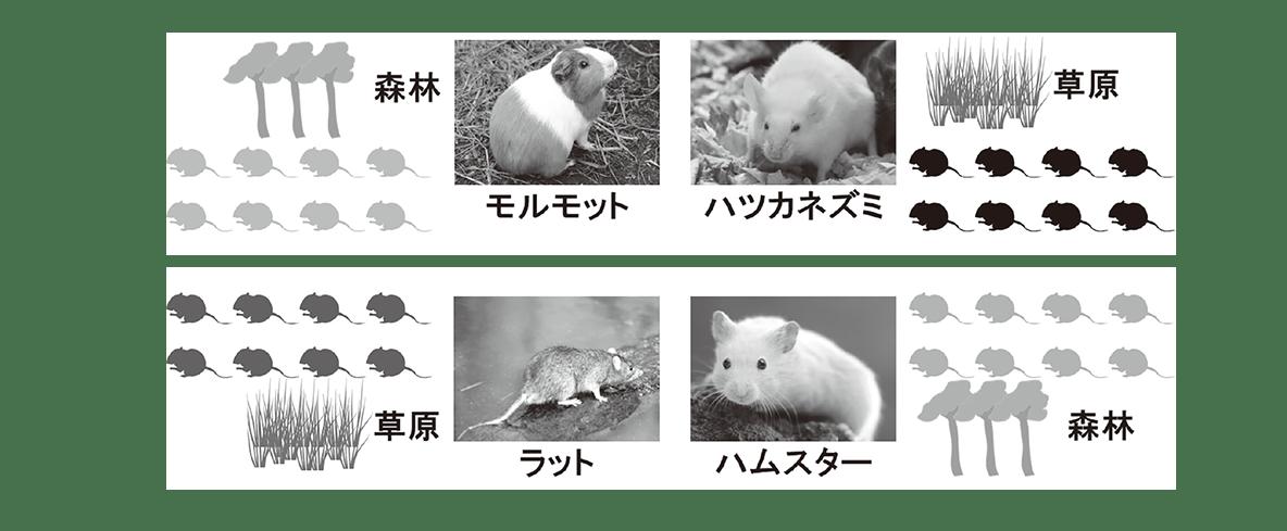 高校 生物 生態5 ポイント1 図