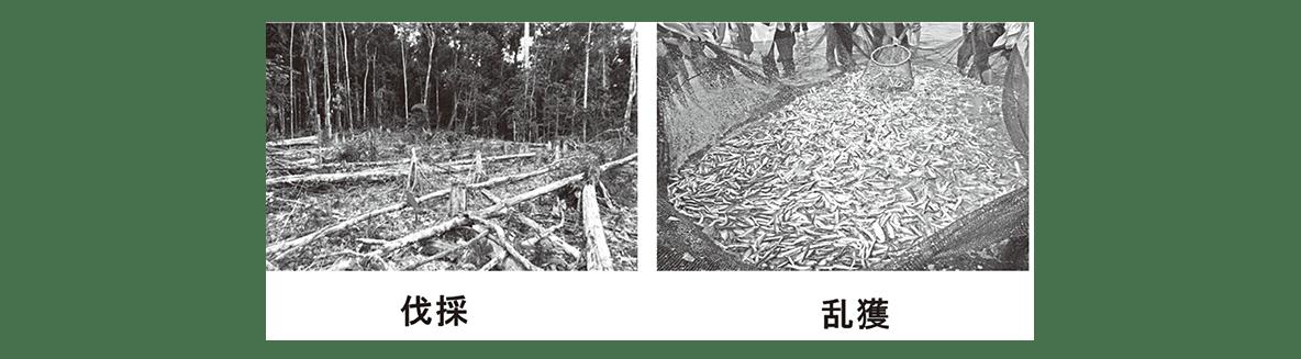 高校 生物 生態5 ポイント3 伐採・乱獲の図