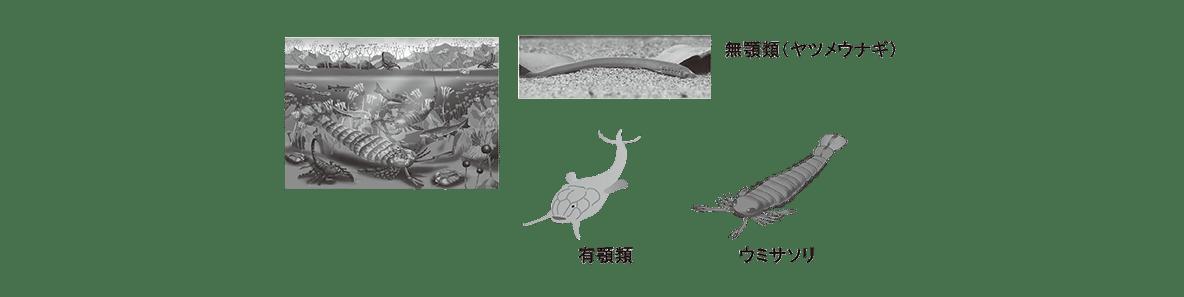 高校 生物 進化6 ポイント2 ウミサソリから左の図