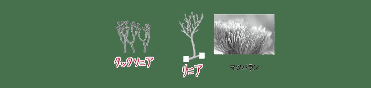 高校 生物 進化6 ポイント2 クックソニアから右の図・文字うめる