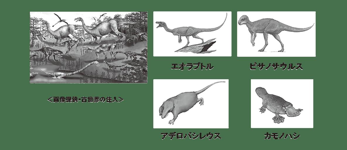 高校 生物 進化8 ポイント2 図のみ