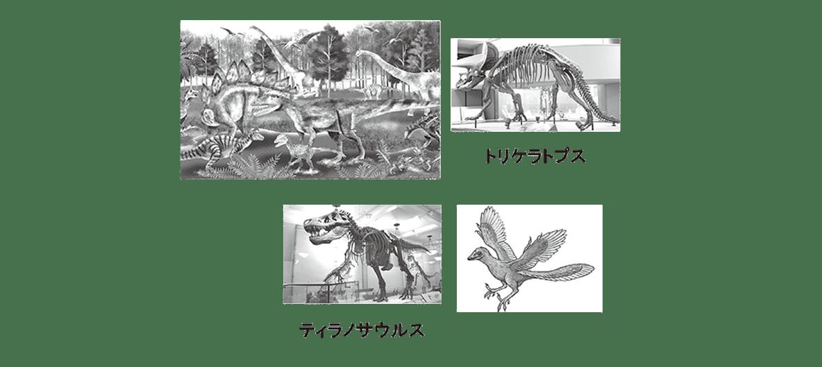 高校 生物 進化8 ポイント3 トリケラトプスと始祖鳥から左の図