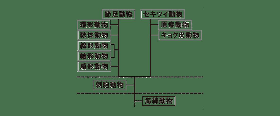 高校 生物 分類10 ポイント2 図のみ(「三胚葉」「二胚葉」「無胚葉」とカッコ、その右の図を除く)