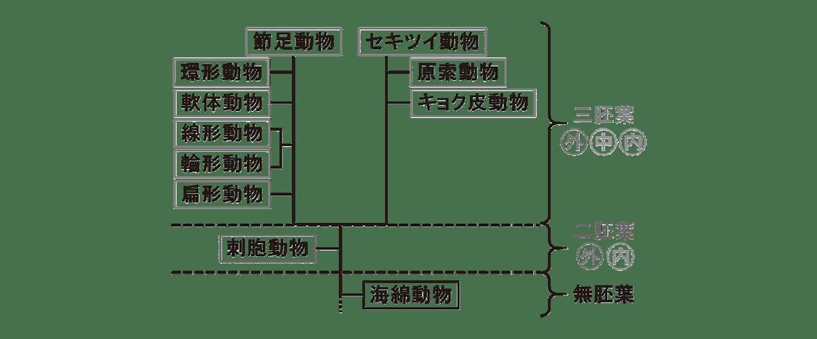 高校 生物 分類10 ポイント2 図のみ(右の図を除く)