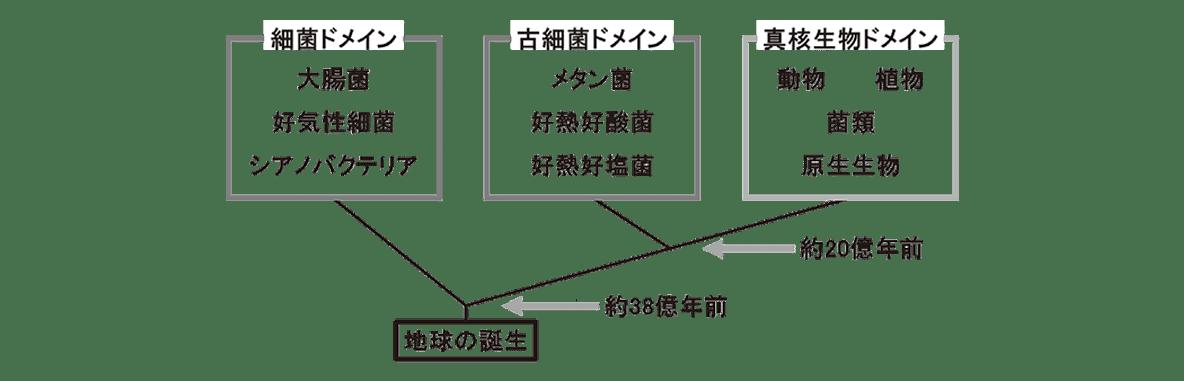 高校 生物 分類2 ポイント2 図の下(樹形図)