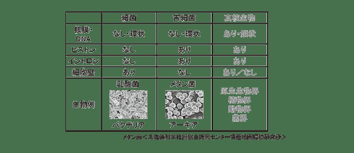 高校 生物 分類4 ポイント1 図