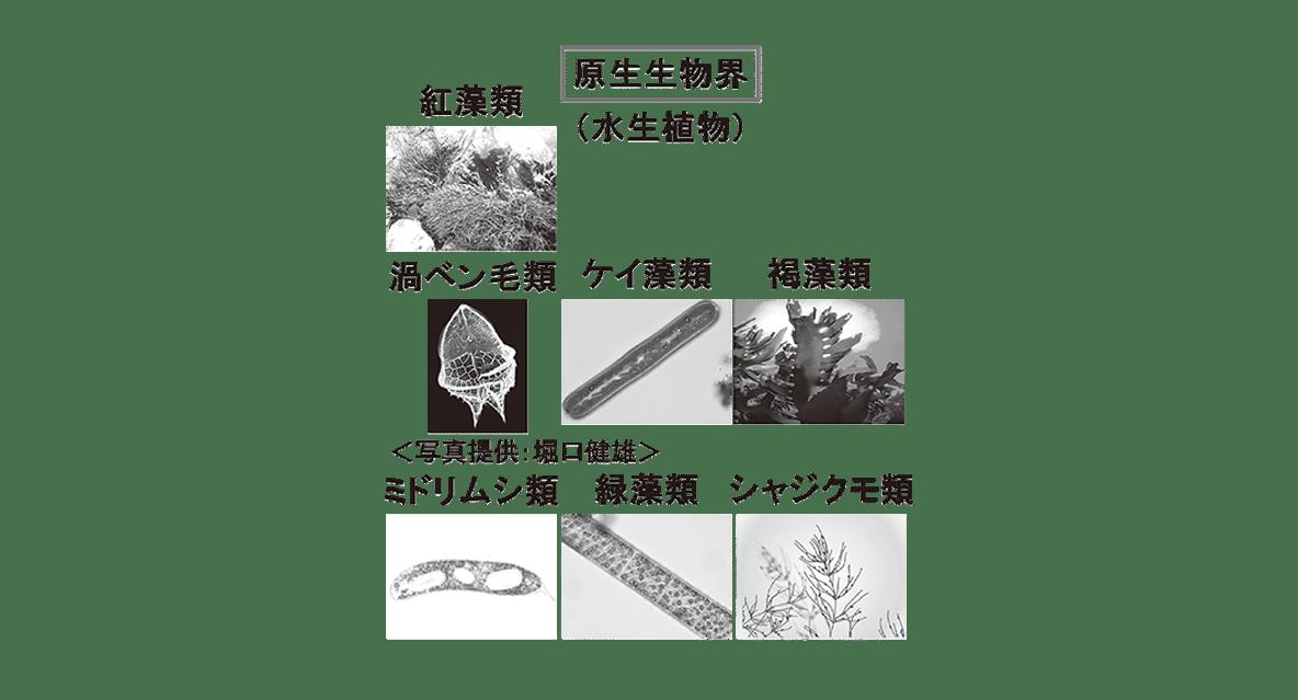 高校 生物 分類5 ポイント1 原生生物界の図(写真7つを含む