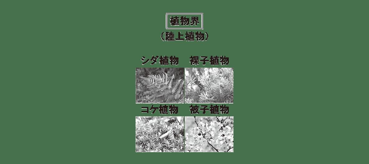 高校 生物 分類5 ポイント1 植物界の図(写真4つを含む