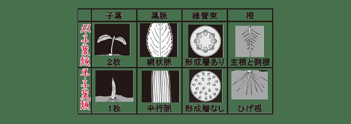 高校 生物 分類7 ポイント3 表のみ(右の合弁花、離弁花のぞく