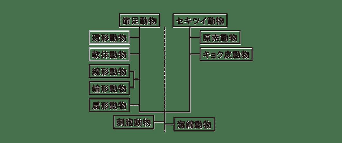 高校 生物 分類9 ポイント3 左の図のみ(右の4つの図のぞく)