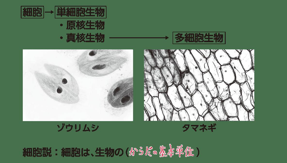 高校 生物 細胞1 ポイント1 全部 空欄埋める