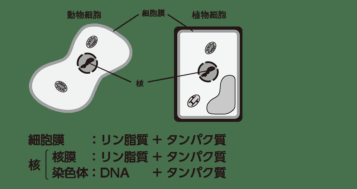 高校 生物 細胞3 ポイント1 全部