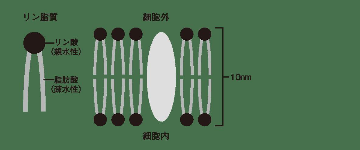 高校 生物 細胞3 ポイント2 左図と中央図