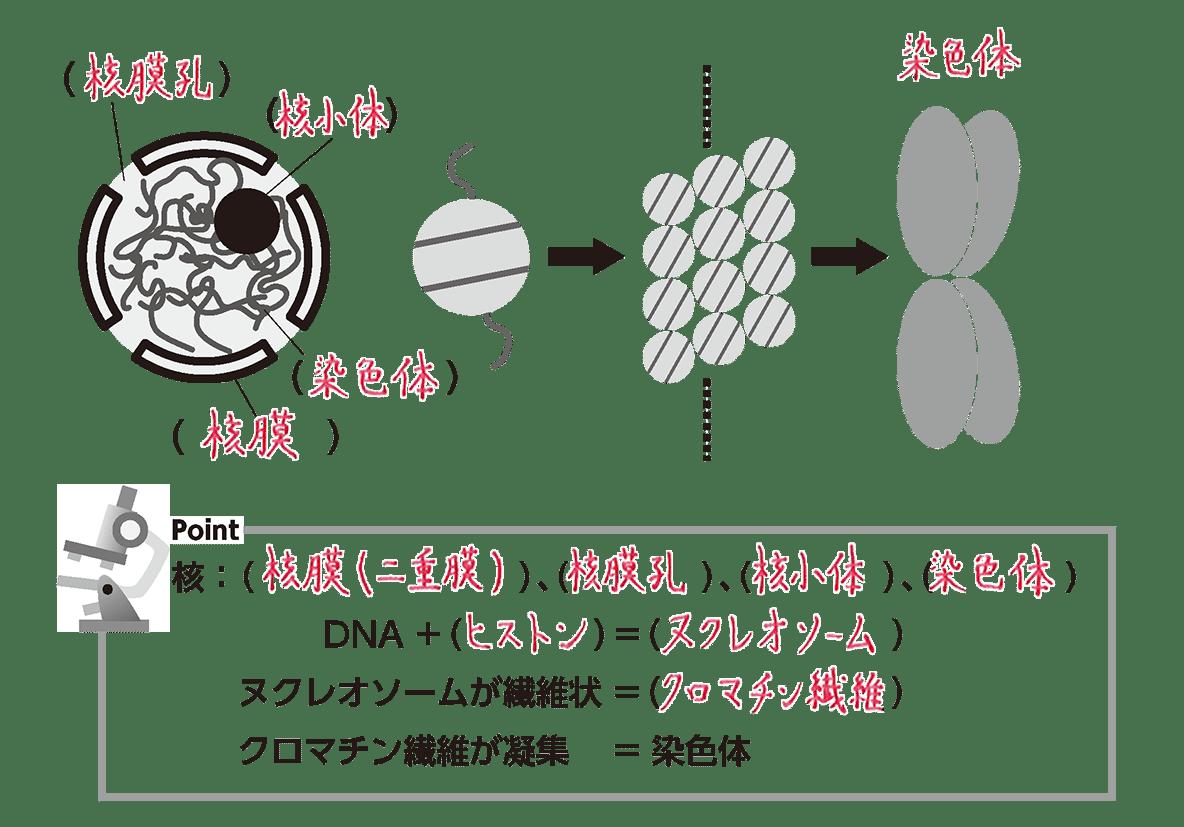 高校 生物 細胞3 ポイント3 全部 空欄埋める