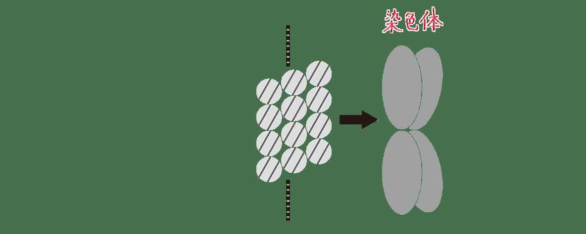 高校 生物 細胞3 ポイント3 図 左端の図のみカット