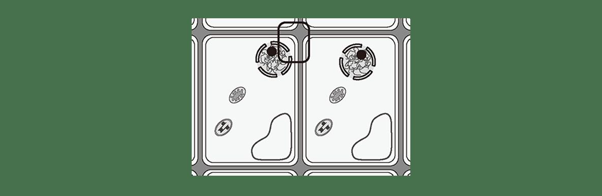 高校 生物 細胞9 ポイント2 左の図