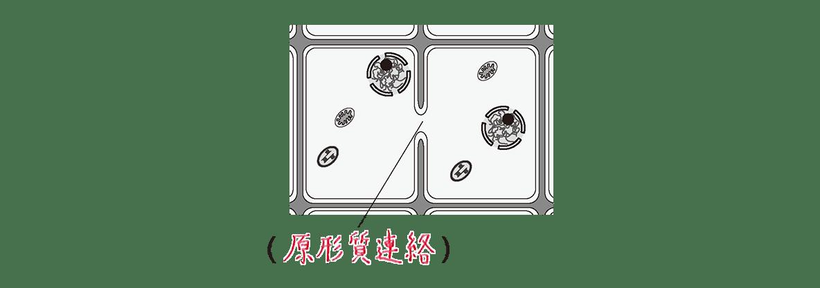 高校 生物 細胞9 ポイント2 右の図