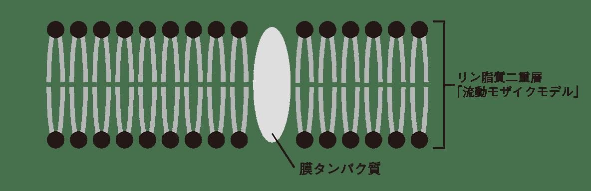 高校 生物 細胞12 ポイント1 図