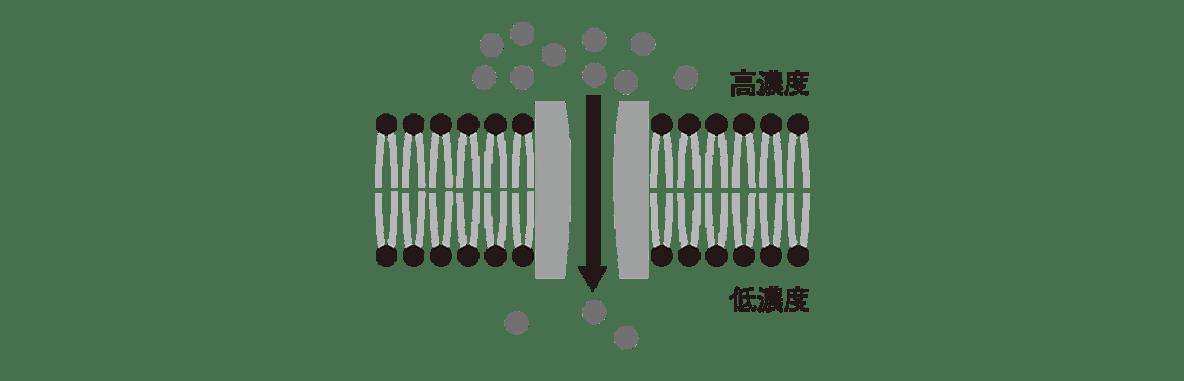 高校 生物 細胞13 ポイント1 図