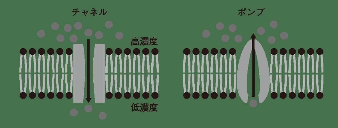 高校 生物 細胞16 ポイント1 図