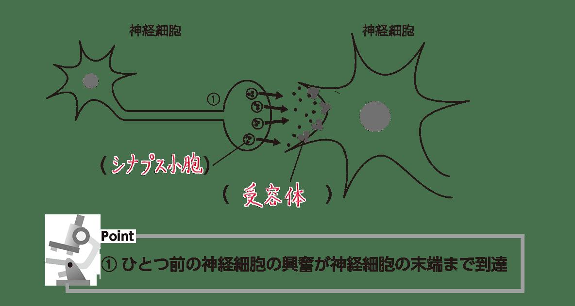 高校 生物 細胞24 ポイント2 図(②-④カット 空欄埋める)、ポイント①