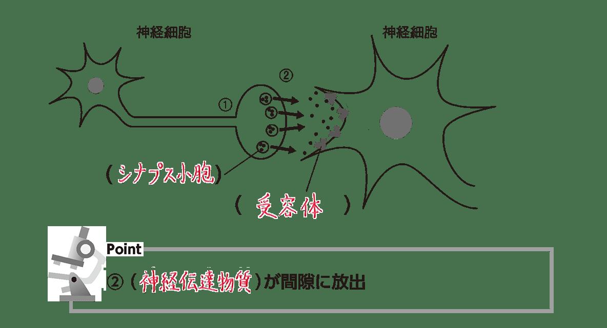 高校 生物 細胞24 ポイント2 図(③-④カット 空欄埋める)、ポイント②(空欄埋める)
