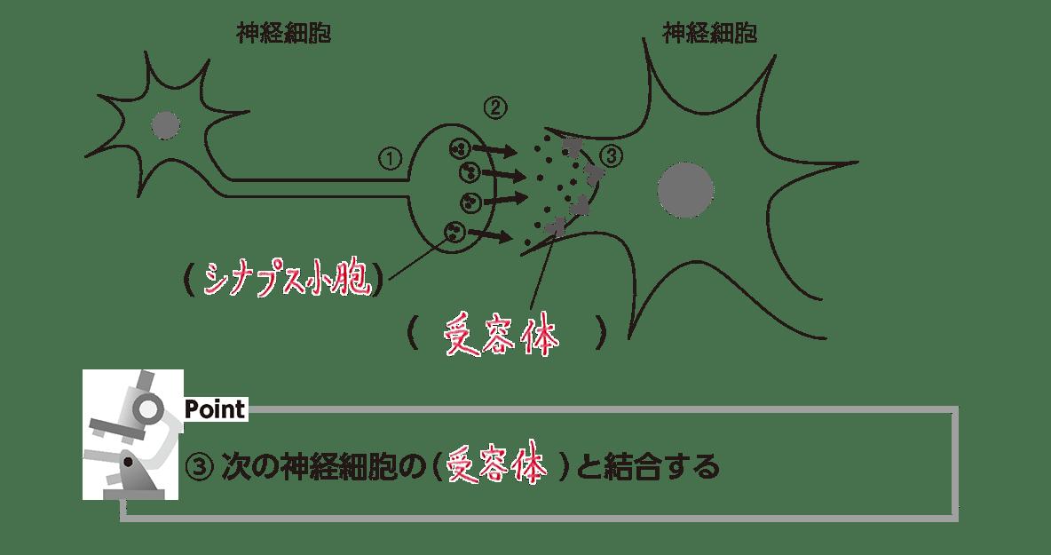 高校 生物 細胞24 ポイント2 図(④カット 空欄埋める)、ポイント③(空欄埋める)
