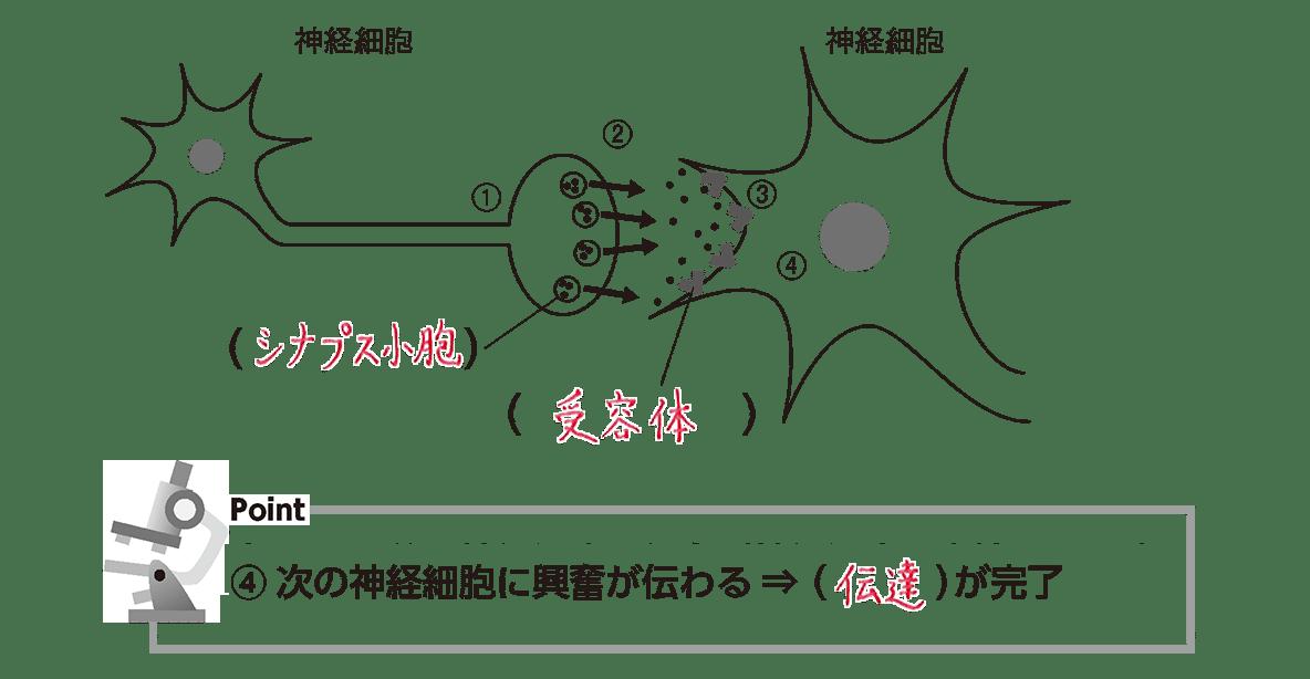 高校 生物 細胞24 ポイント2 図、ポイント④(空欄埋める)