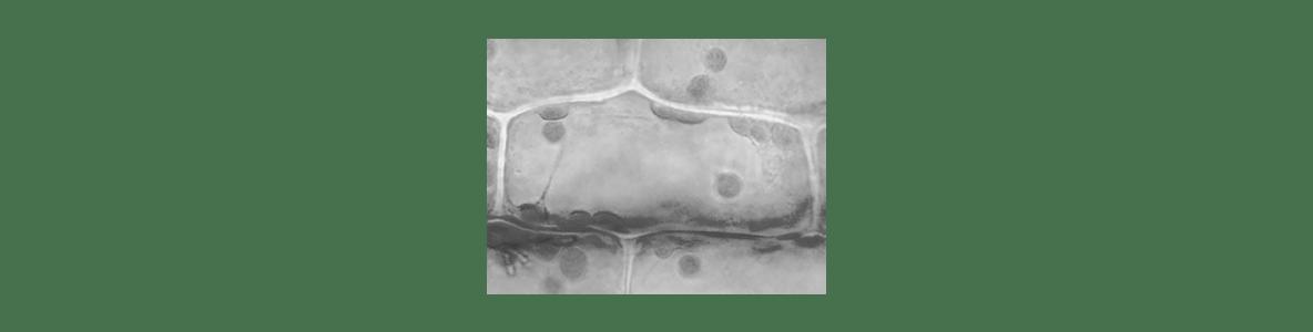 高校 生物 細胞25 ポイント3 左図
