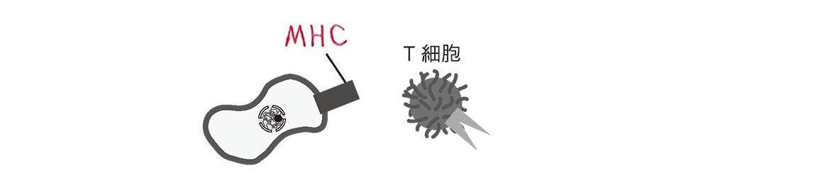 高校 生物 細胞28 ポイント2 図の左上のみ