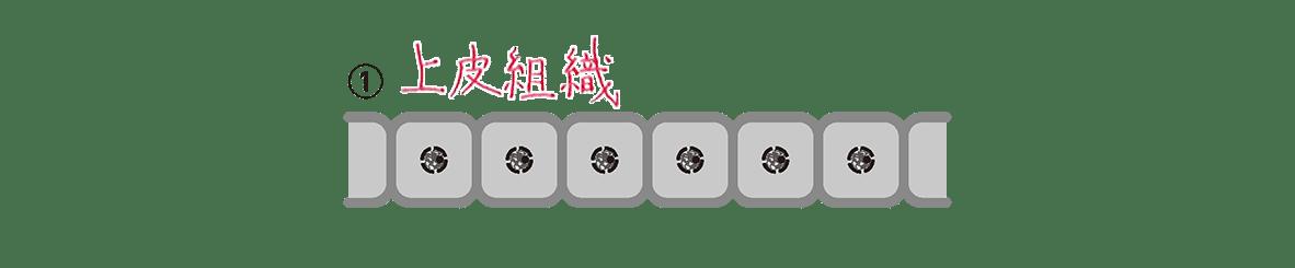 高校 生物 細胞30 ポイント2 左の図 空欄埋める