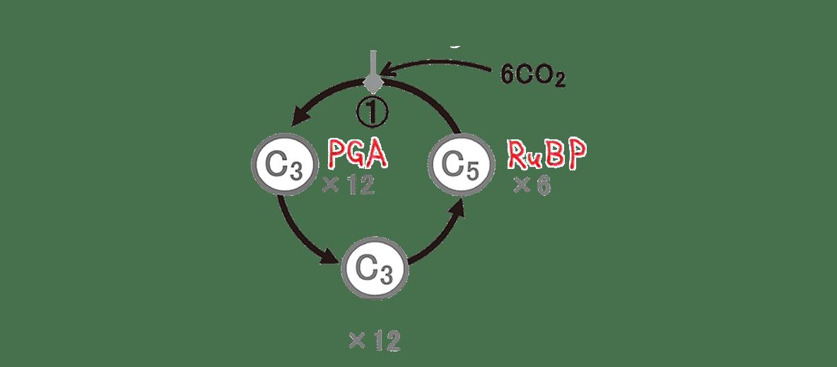 高校 生物 代謝4 ポイント2 図 RuBisCOとGAP空ける
