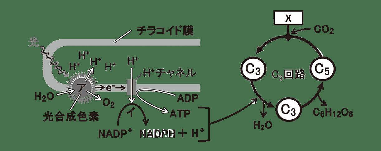 高校 生物 代謝9 演習3 図のみ